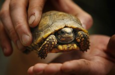 Four accused of eating endangered Zimbabwe tortoises