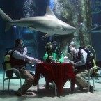 (*They're not really dangerous.) Aquarists at The Sea Life London Aquarium hold a tea party in the Pacific Reef Display shark tank to challenge the perception of them as monsters of the sea. Image: Lewis Whyld/PA Wire