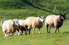 Farmers urge 'biosecurity' over fears UK livestock virus could reach Ireland