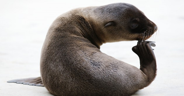 In photos: Californian sea lion pup born at Dublin Zoo