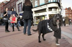 Animal rights group to march in Dublin