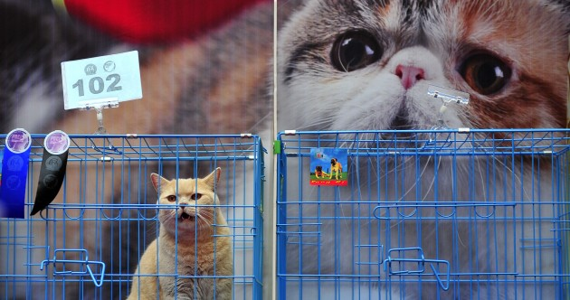 Pictures: Want to join the Cat Fanciers Association?…