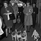 See? The Duke and Duchess of Windsor arrive at the Saint Lazare railway station in Paris on May 2, 1960, with their four French pugs. (AP Photo/Jacques Marqueton)