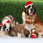 Dogs in Santa hats REALLY help productivity. (Geoff Caddick/PA Archive)