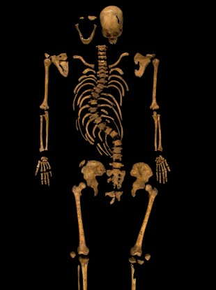skeleton found under car park is king richard iii say