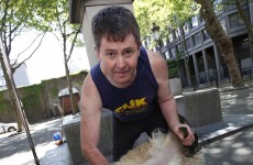 Millstreet shapes up for sheep shearing championships