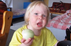 Want to see a toddler eat a raw onion like an apple?