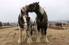 In pictures: Day one of the National Ploughing Championships