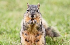 Police officer fired after nasty altercation with squirrel